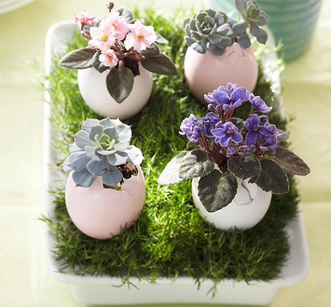 huevos de pascua plantas